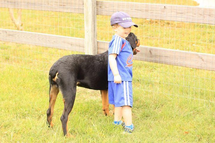 Rottweiler puppies rescue texas