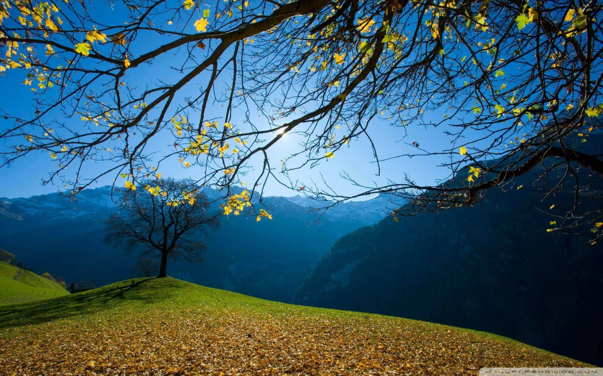 Jesen U švicarskoj Slike Prirode Pozadine Za Desktop