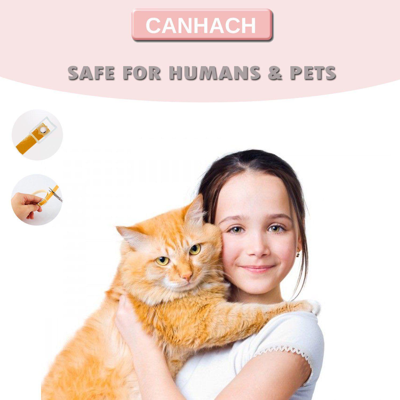 Flea Collar For Cats Natural Cat Flea And Tick Collar Adjustable Protects Kittens Adults Seniors Hypoallergenic Waterproof P Cat Fleas Cat Collars Natural Cat