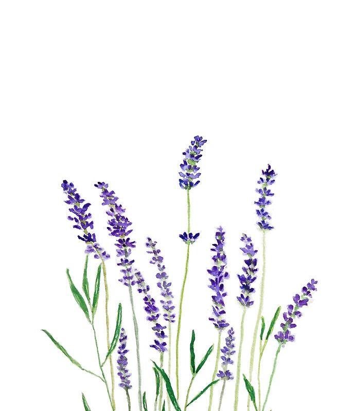 Purple Lavender By Colorandcolor Lavender Paint Watercolor And Sharpie Watercolor Flowers