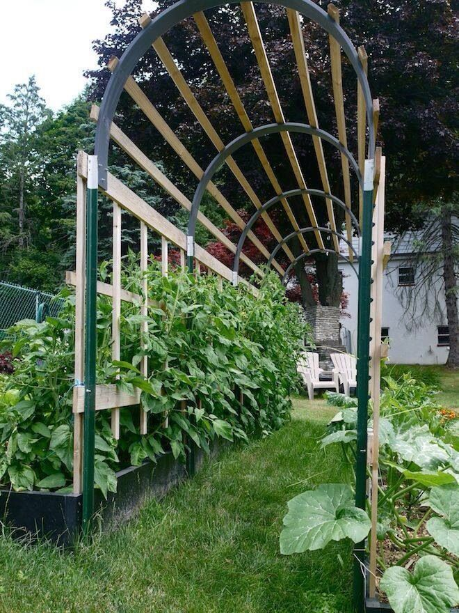 Tomato trellis, i think we could use PVC pipe for the arch ...