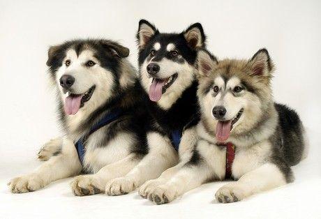 Labrador Dachshund Mix Puppies Dogs