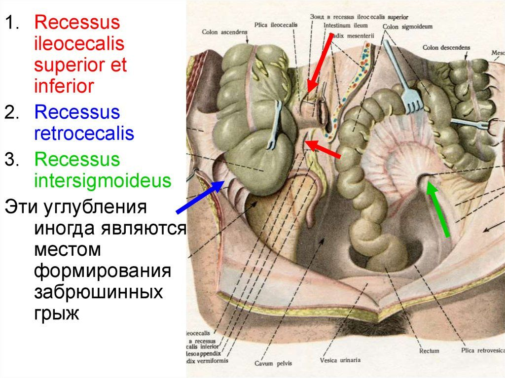 slide-25.jpg (1024×767) | Anatomy | Pinterest | Anatomy