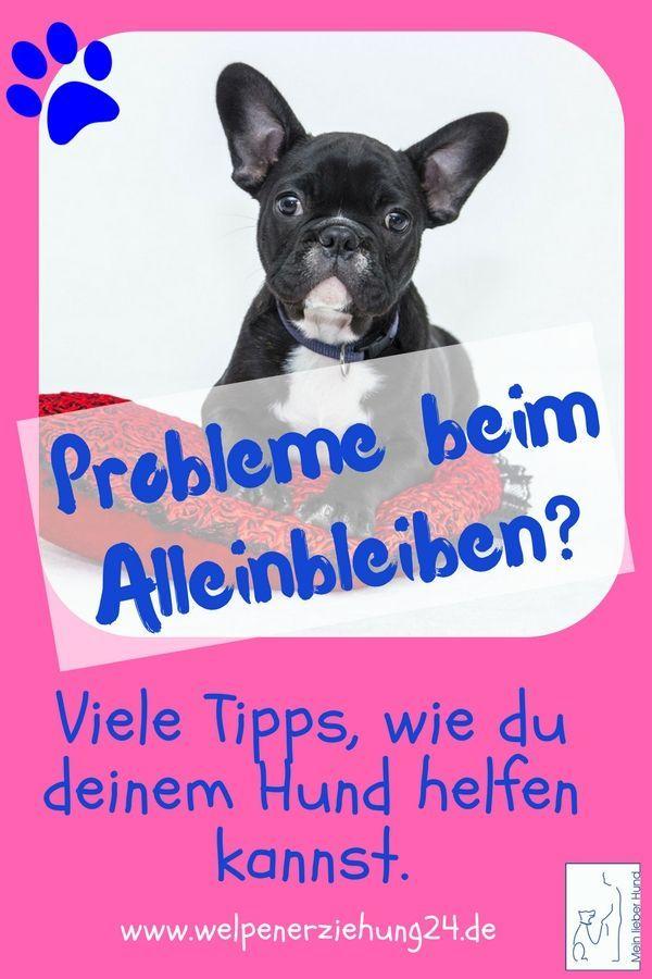 Probleme Beim Alleinbleiben Welpenerziehung Hundchen Training Welpen