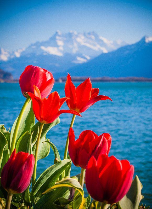 inspiration pour patchwork (couleurs) - Montreux, Switzerland -- by miemo