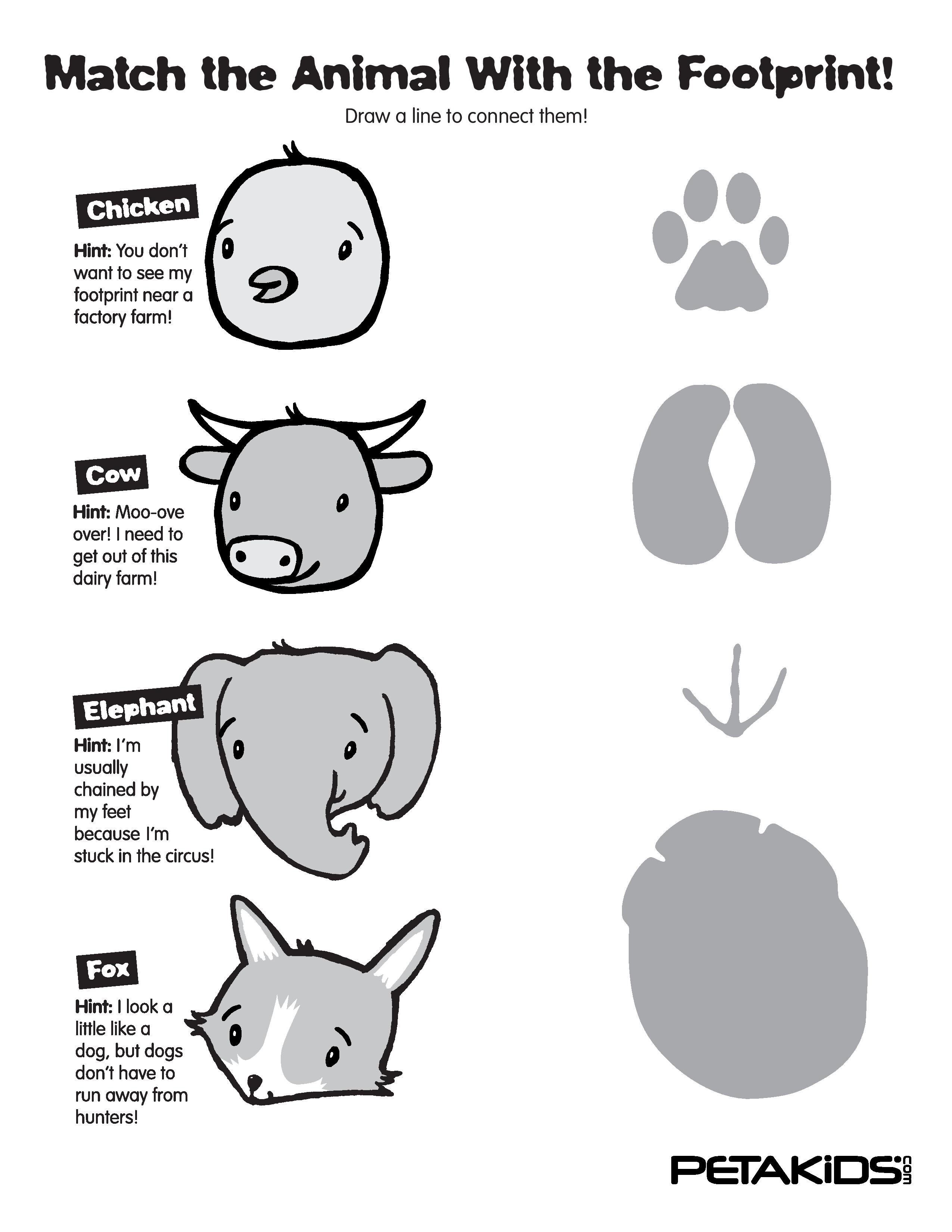 footprints with the animal who left