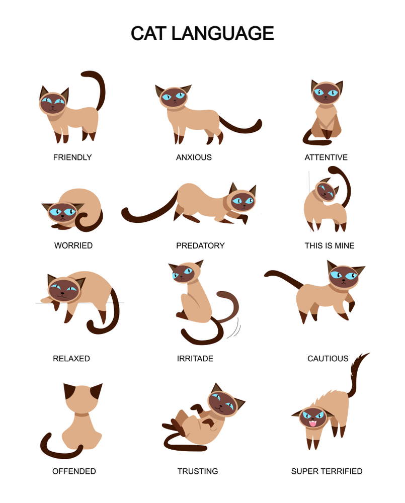 Cat Language Feelings Meaning Cute Expressions Cat Language Cat Expressions Cat Tail Meaning