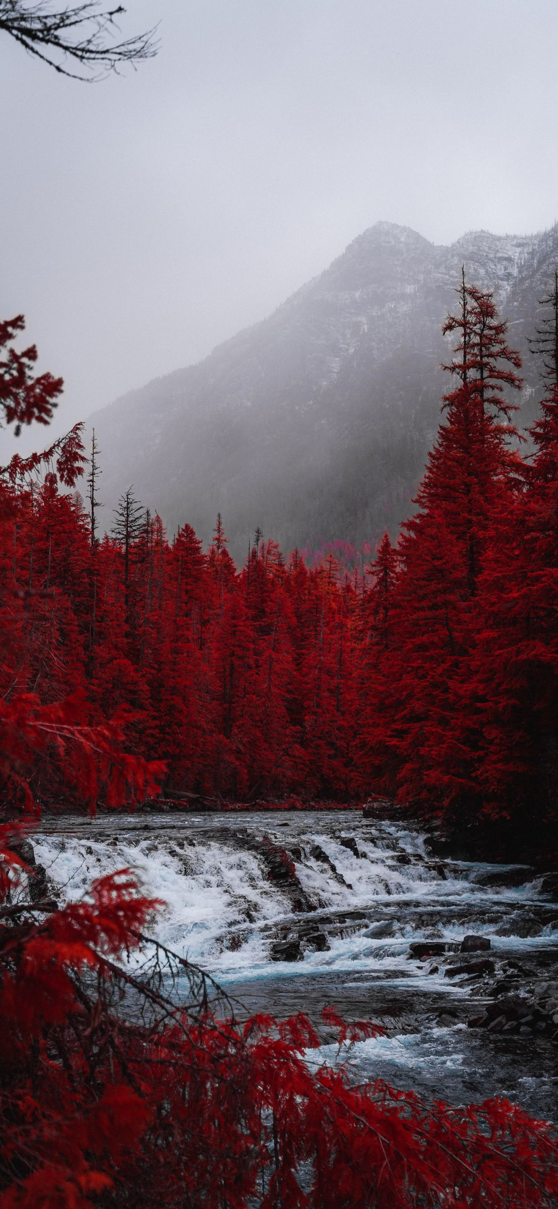 1125x2436 Red Forest Trees River Stream Nature Wallpaper Still Life Photography Red Aesthetic Aesthetic Backgrounds