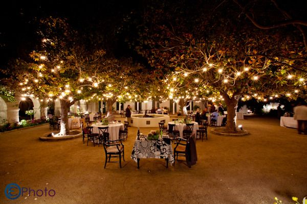 Our wedding site!The Memory Garden, Monterey, CA. 75 year old Magnolia trees dripped in white lights.