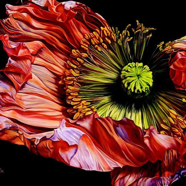 Hyperrealism Visual Arts: Pin On Poppies