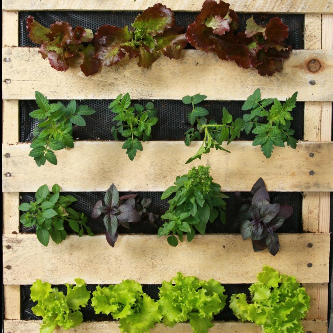 Vertical Fruit And Vegetable Pallet Garden