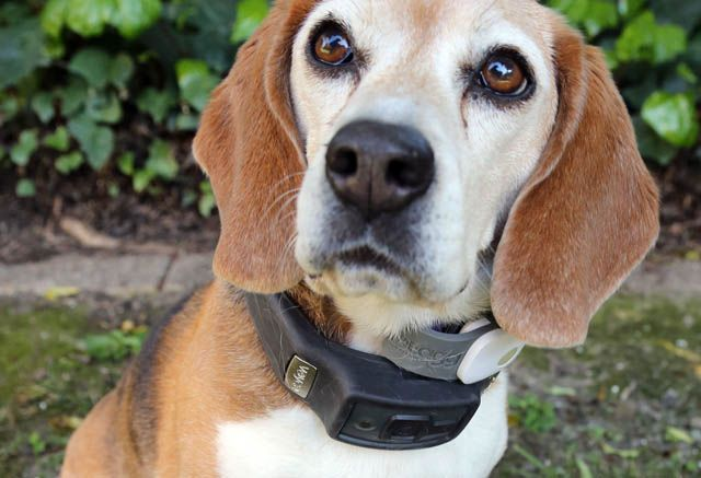We Have A 10 Year Old Beagle Named Lucy Test Drive Some Of The