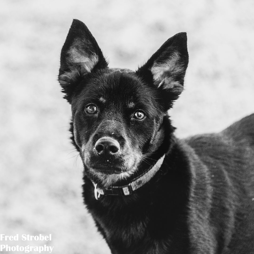 Today's monochromemonday is Bugsy. IrBugsey is available