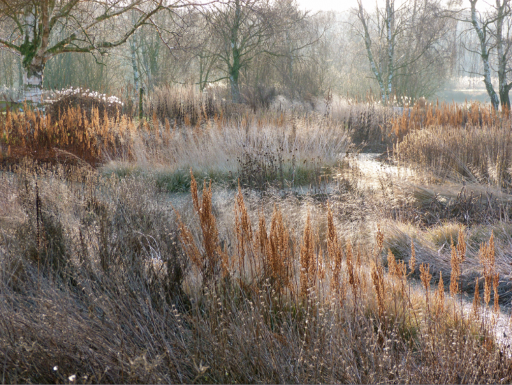 In winter, Piet Oudolf leaves perennial grasses standing to create moody textures and silvery color in the landscape. Gardenista