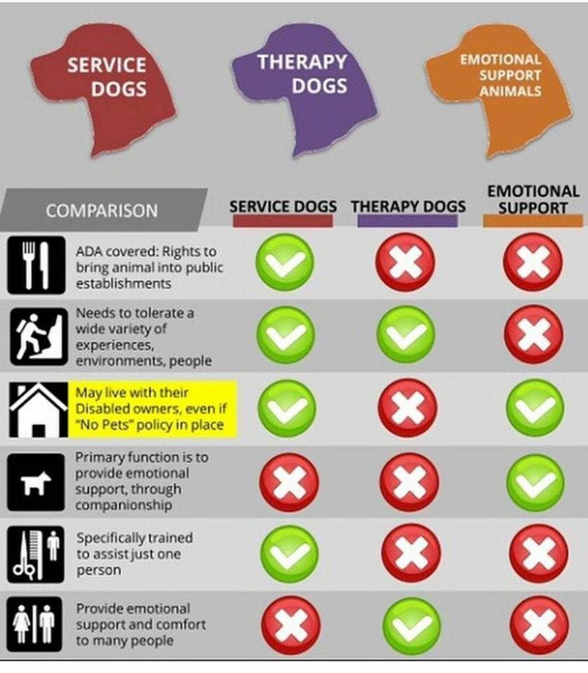 The Landlord Guide To Assistance Animals Service Dogs