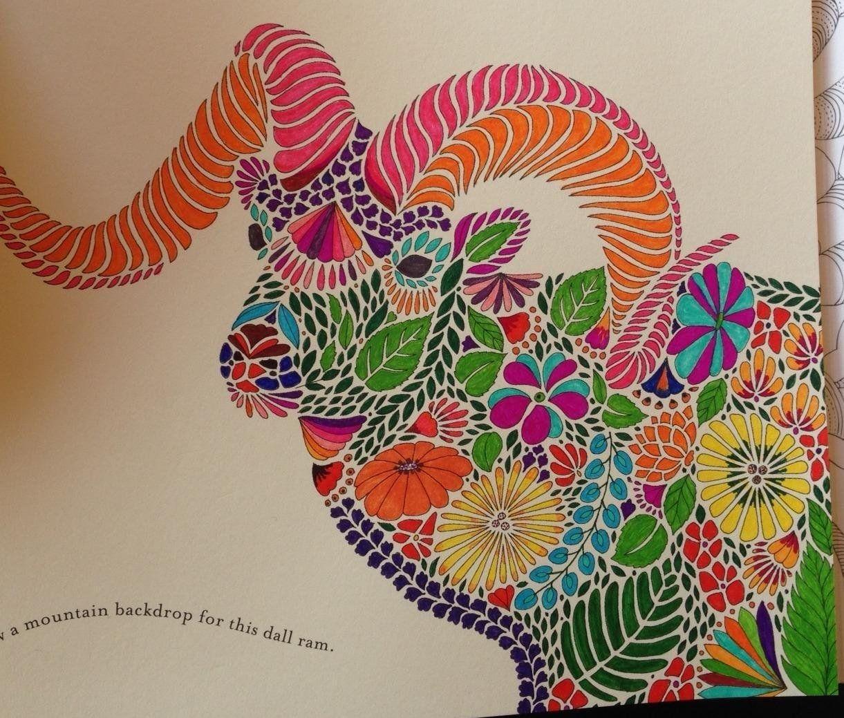 Color me draw me animal kingdom book - Millie Marotta S Animal Kingdom A Colouring Book Adventure Amazon Co Uk