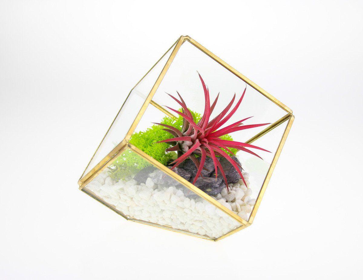 Square Geometric Terrarium Kit with an Elegant Air Plant - Complete Kit - White Gravel & Green Moss