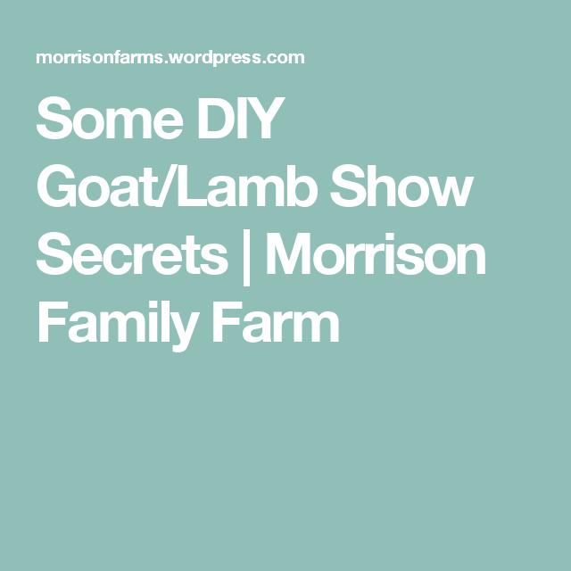 Some DIY Goat/Lamb Show Secrets | Lambs | Boer goats, Show