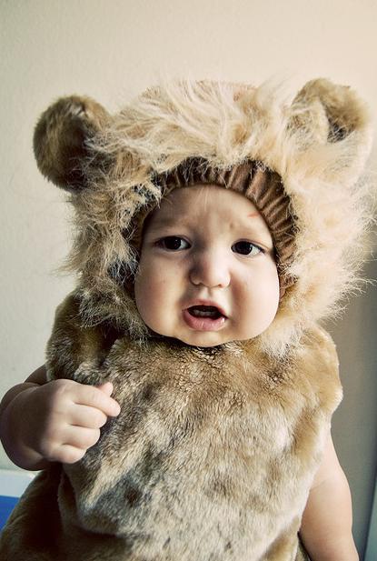 Infant lion is super cute!  sc 1 st  Pinterest & Infant lion is super cute! | Fall/Halloween/Thanksgiving | Pinterest ...