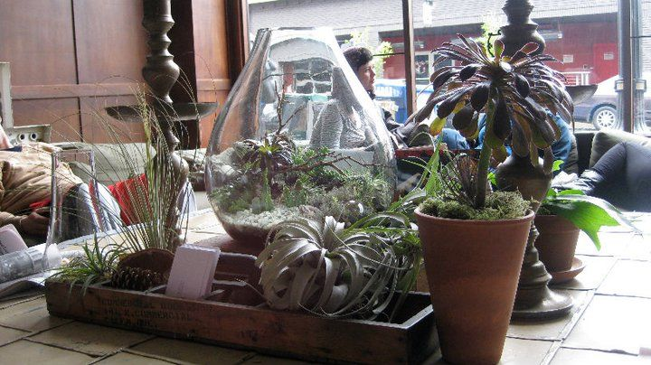 Terrariums And Greenery At Ace Hotel Portland Flowers And Plants