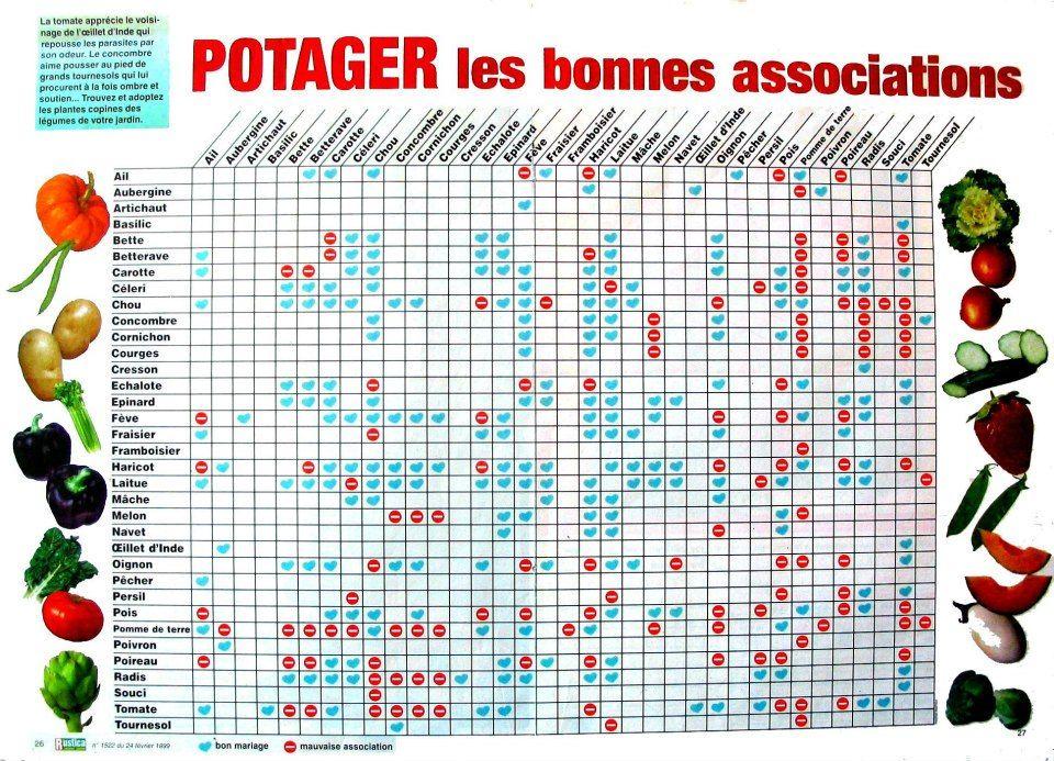Tableau des associations de l gumes id es verdoyantes for Potager permaculture plan