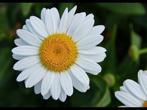 White flower white flower meaning white flower quotes places white flower white flower meaning white flower quotes mightylinksfo
