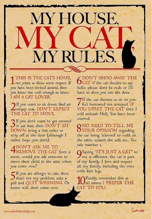 My House, My Cat, My Rules