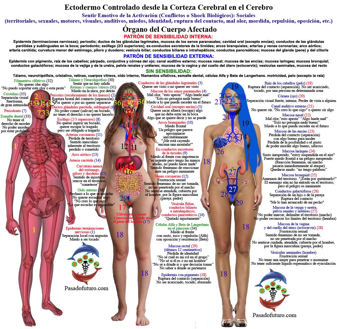 Encantador Colocación órgano Corporal Bandera - Anatomía de Las ...