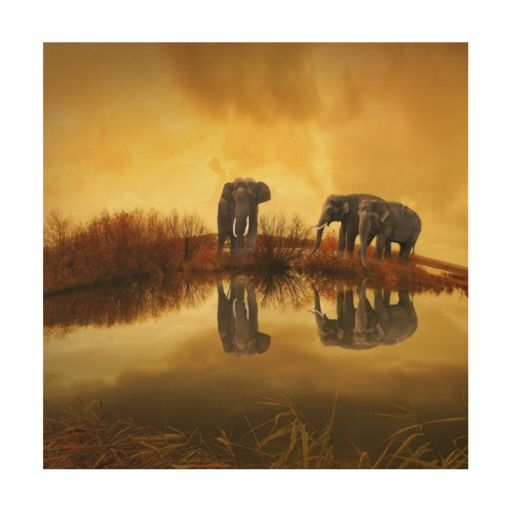 Elephant Wood Canvases