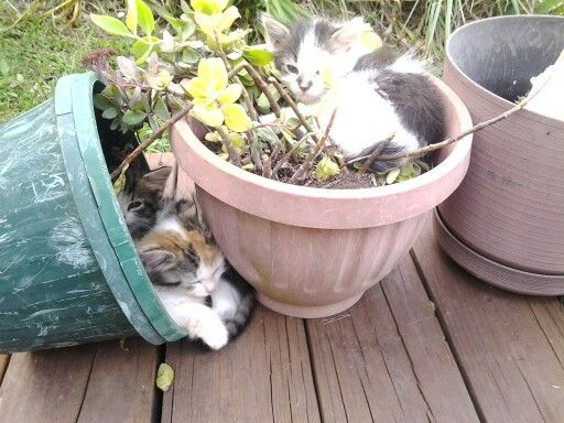 Kittys in planters
