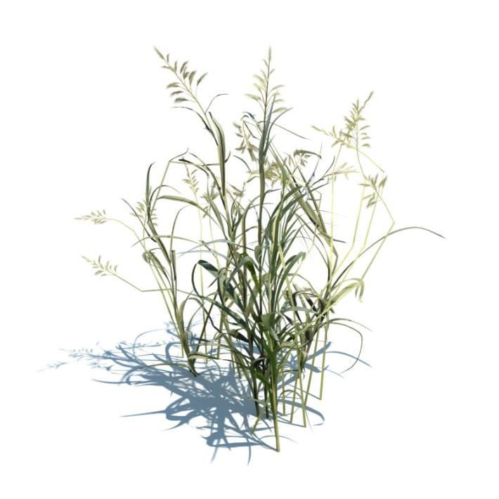 Ornamental Aquatic Grass By Evermotion Highly Detailed 3d Model