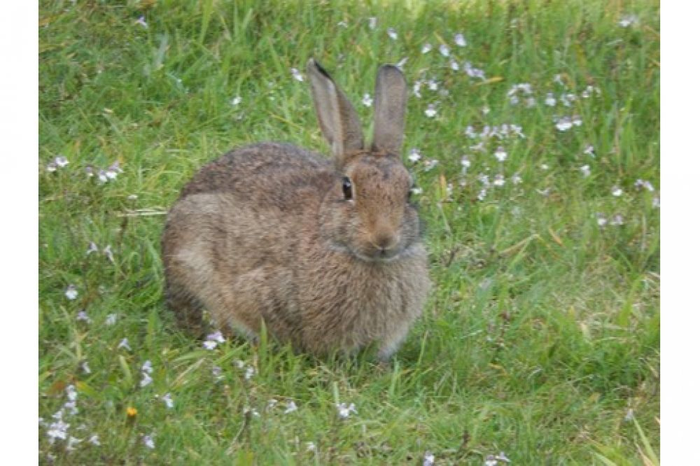 The best! and another one  Love Rabbits? Visit us by clicking active link on our bio/profile.  #bunnysept #bunnygirls #bunnysecretstash #bunnyhouse #bunnyfresh #bunnymodel #bunnymum #bunnyhead #bunnylines #bunnyranch #bunnyfamily #bunnypinterest #bunnyinhollywood #bunnyspace #bunnyland