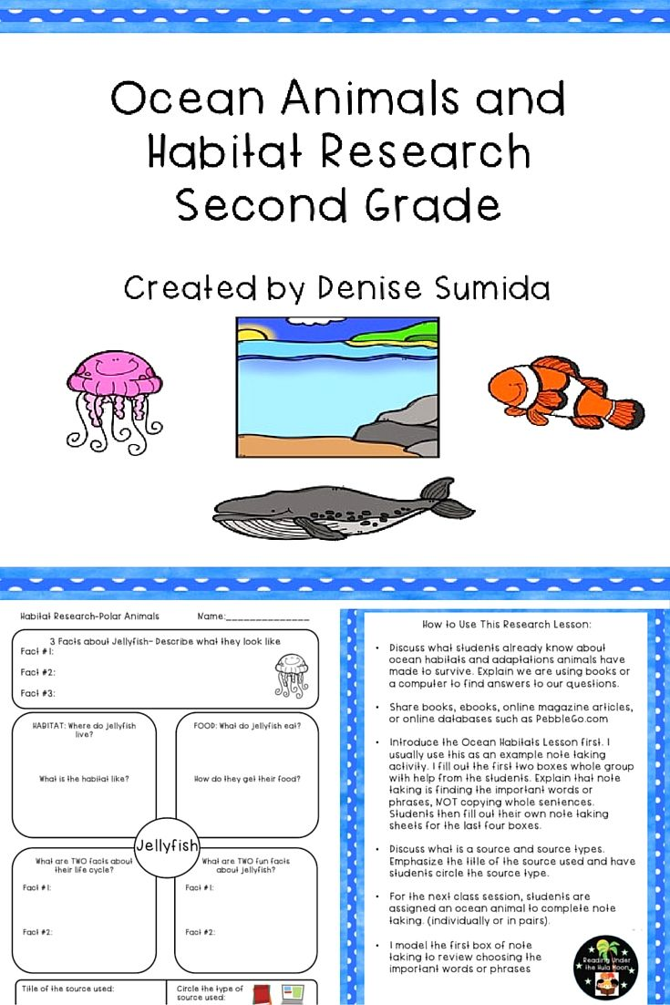 Ocean Animals and Habitat Research Second Grade Ocean
