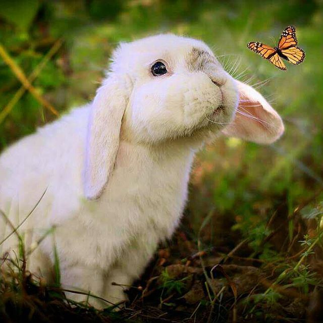 Exempel The Bunny Exempelthebunny Bunny Buy A Bunny Rabbit
