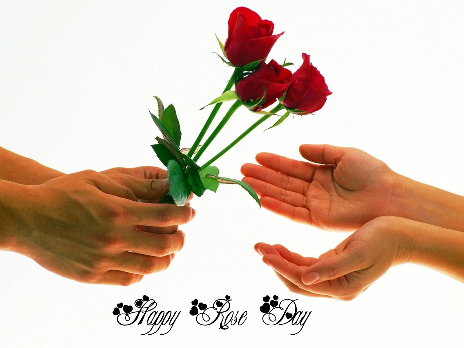 Happy Rose Day Love Psychic Happy New Year Quotes Quotes About New Year Happy rose day ke wallpaper download