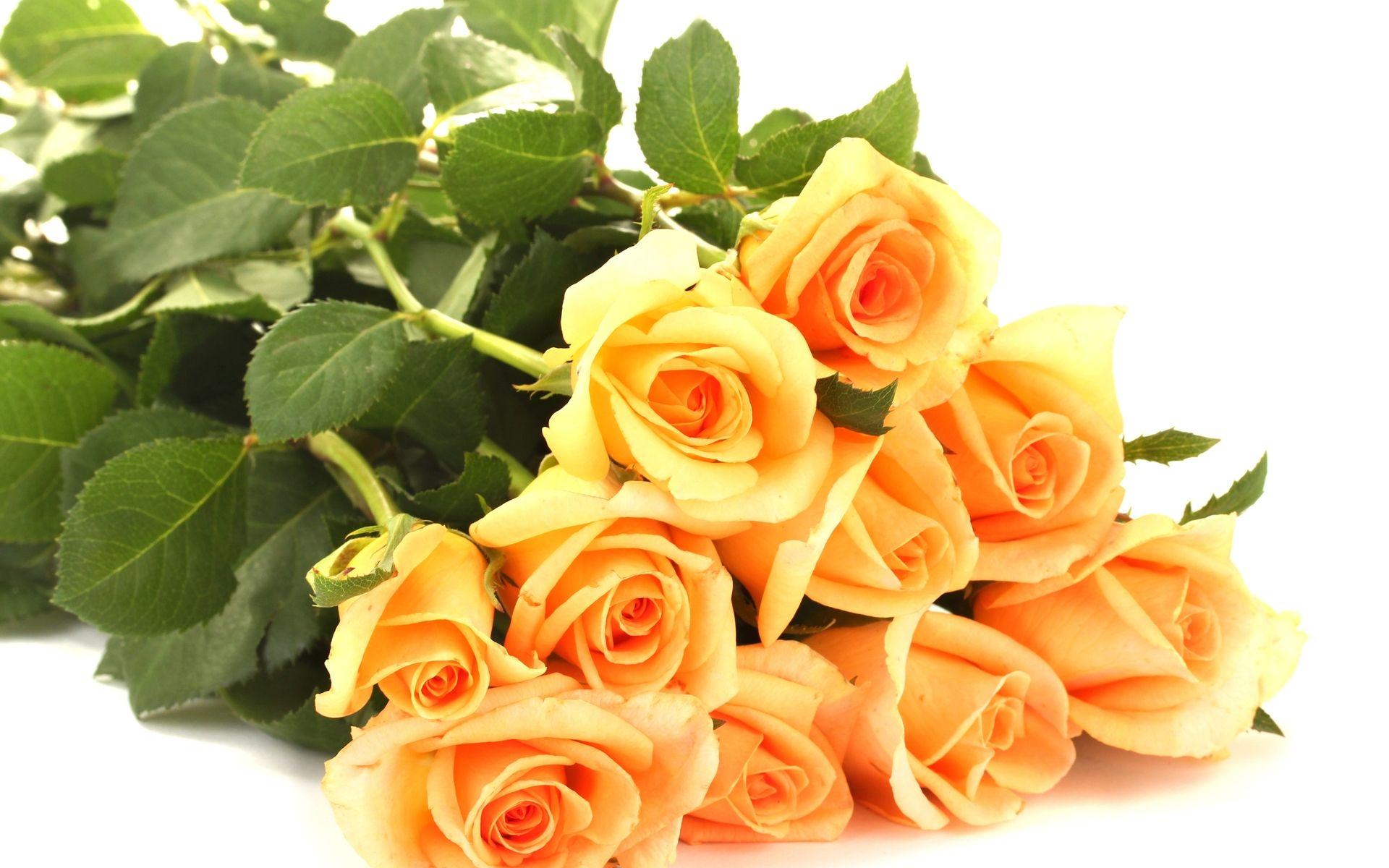 Hd wallpaper yellow rose - Yellow Roses Bokeh Hd Wallpaper