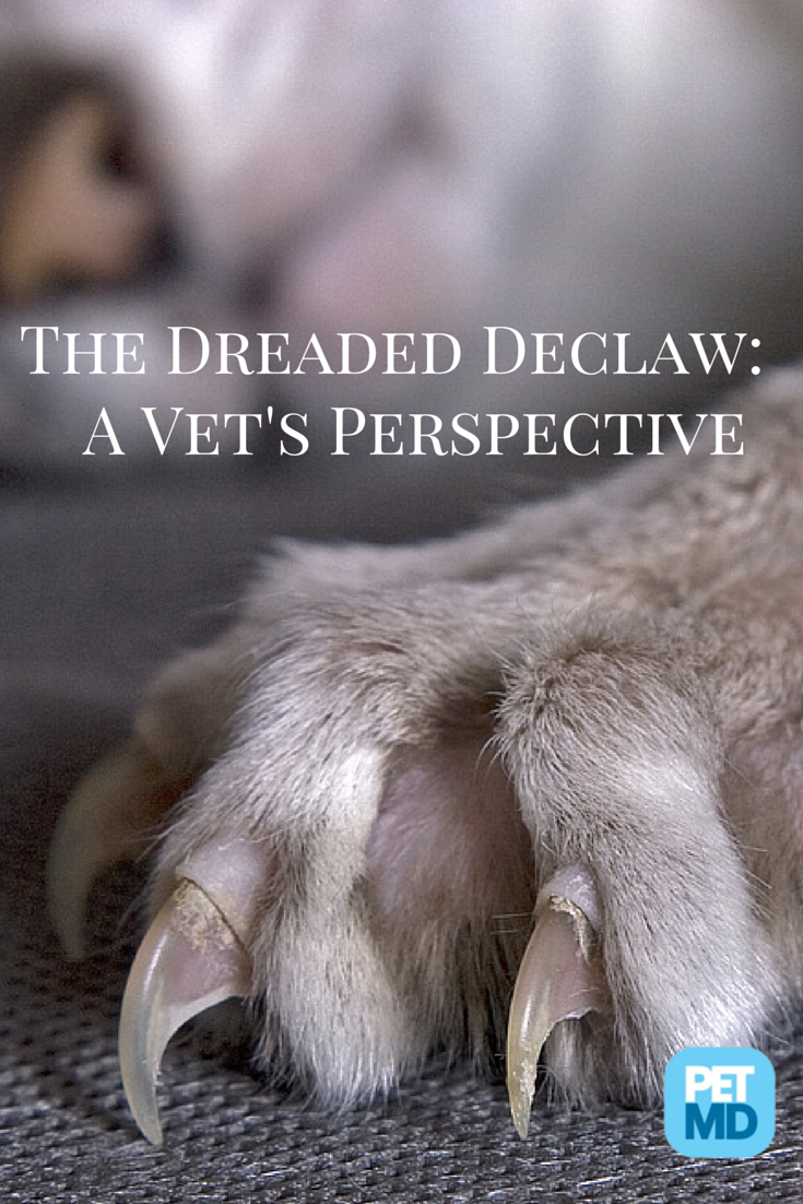 Most People Don T Know What Is Really Involved In A Declaw Surgery For Cats Do You Dog Medicine Declawing Cats Animal Medicine