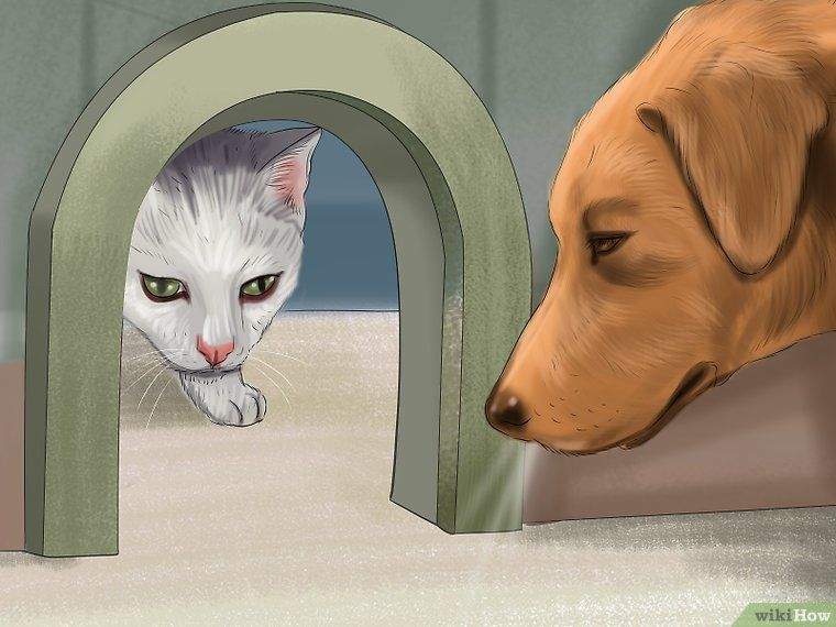 Make a Cat and Dog Get Along Cats, Dog cat, Dogs