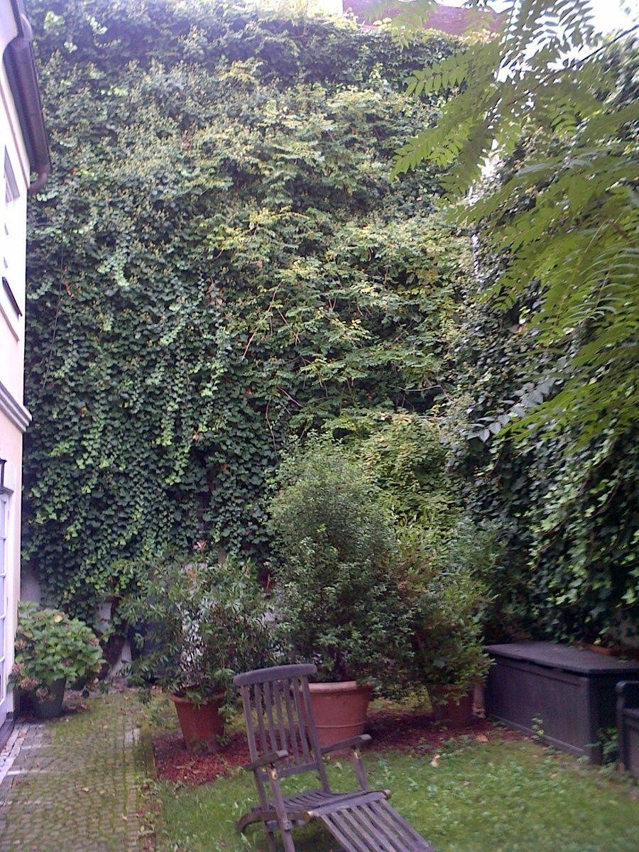 Schnell Wachsende Pflanzen Wachsenden Pflanzen Schnell