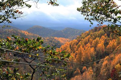 Go Ziplining With Navitat Canopy Tours In Asheville NC 89 Per Adult