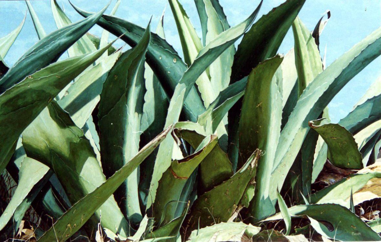 """Armando Zesatti """"El maguey"""" 88x140cm.  Acrilico sobre tela. 2000  www.zesatti.com"""