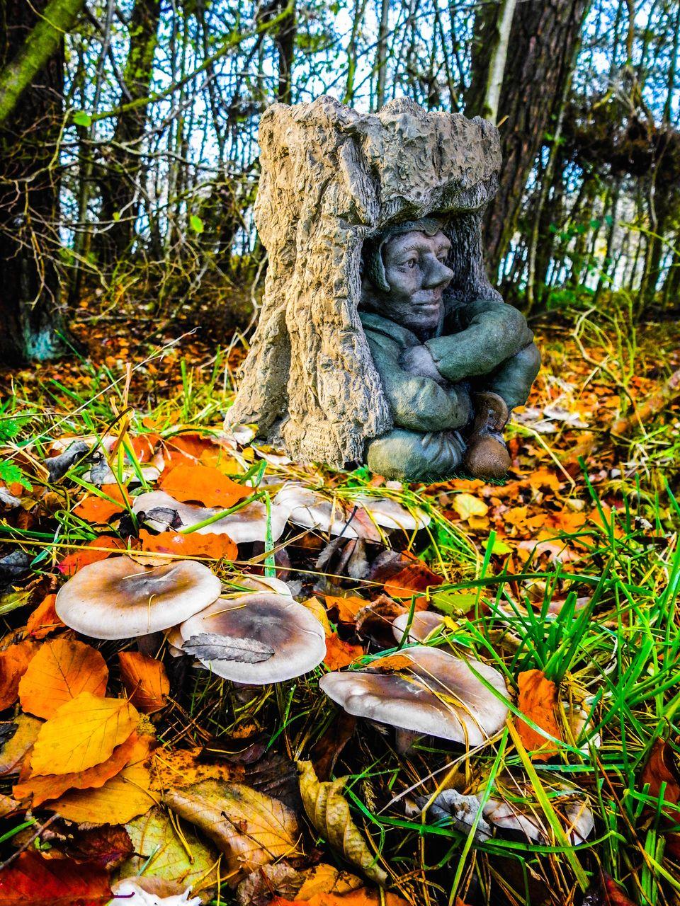 Discount Garden Statues Ltd - EXCLUSIVE Pixie Goblin Bird Bath set in Tree Trunk Hand Made in UK, £159.00 (http://www.discountgardenstatues.co.uk/exclusive-pixie-goblin-bird-bath-set-in-tree-trunk-hand-made-in-uk/)