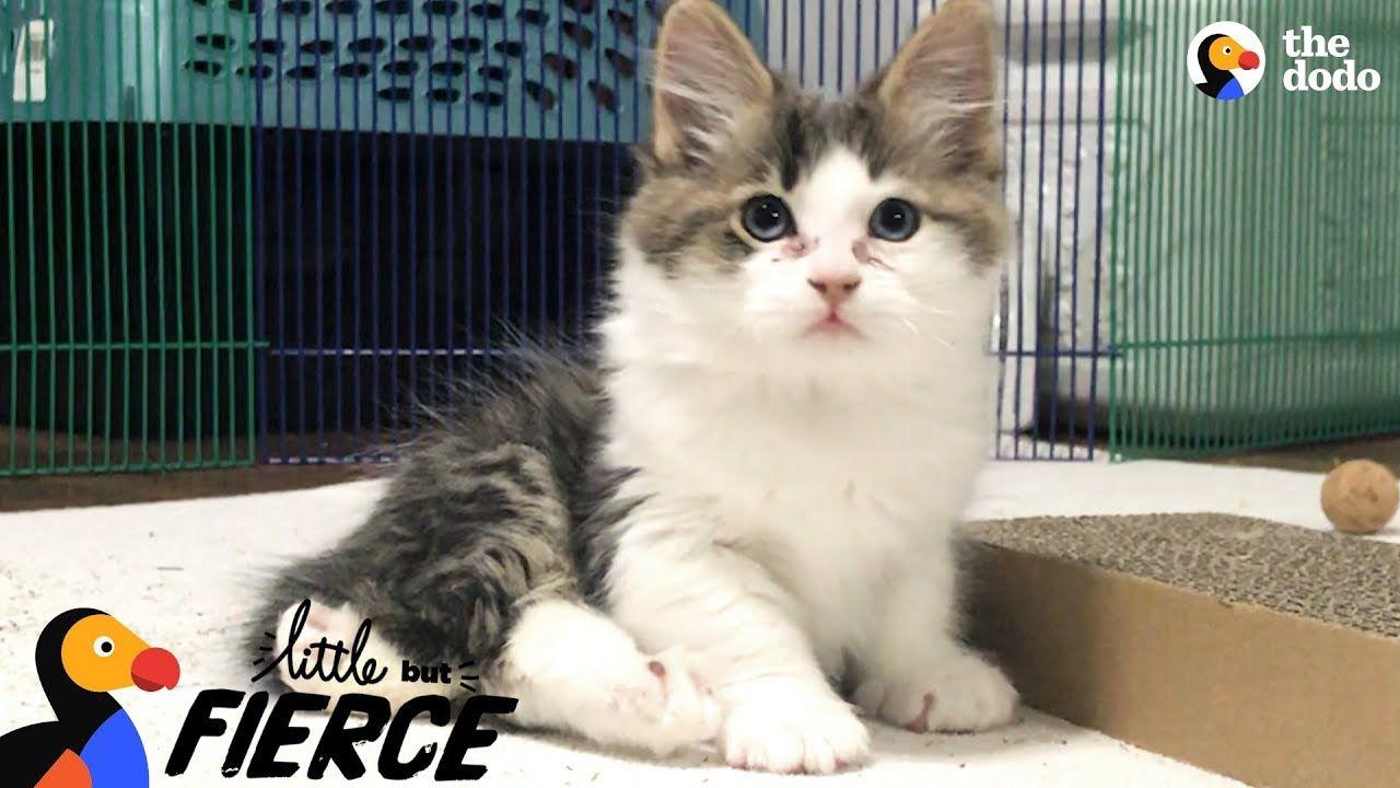 Fuzzy Kittens Help Each Other Learn To Walk The Dodo Little But Fierce Youtube Cute Kitten Gif Kittens Kittens Cutest