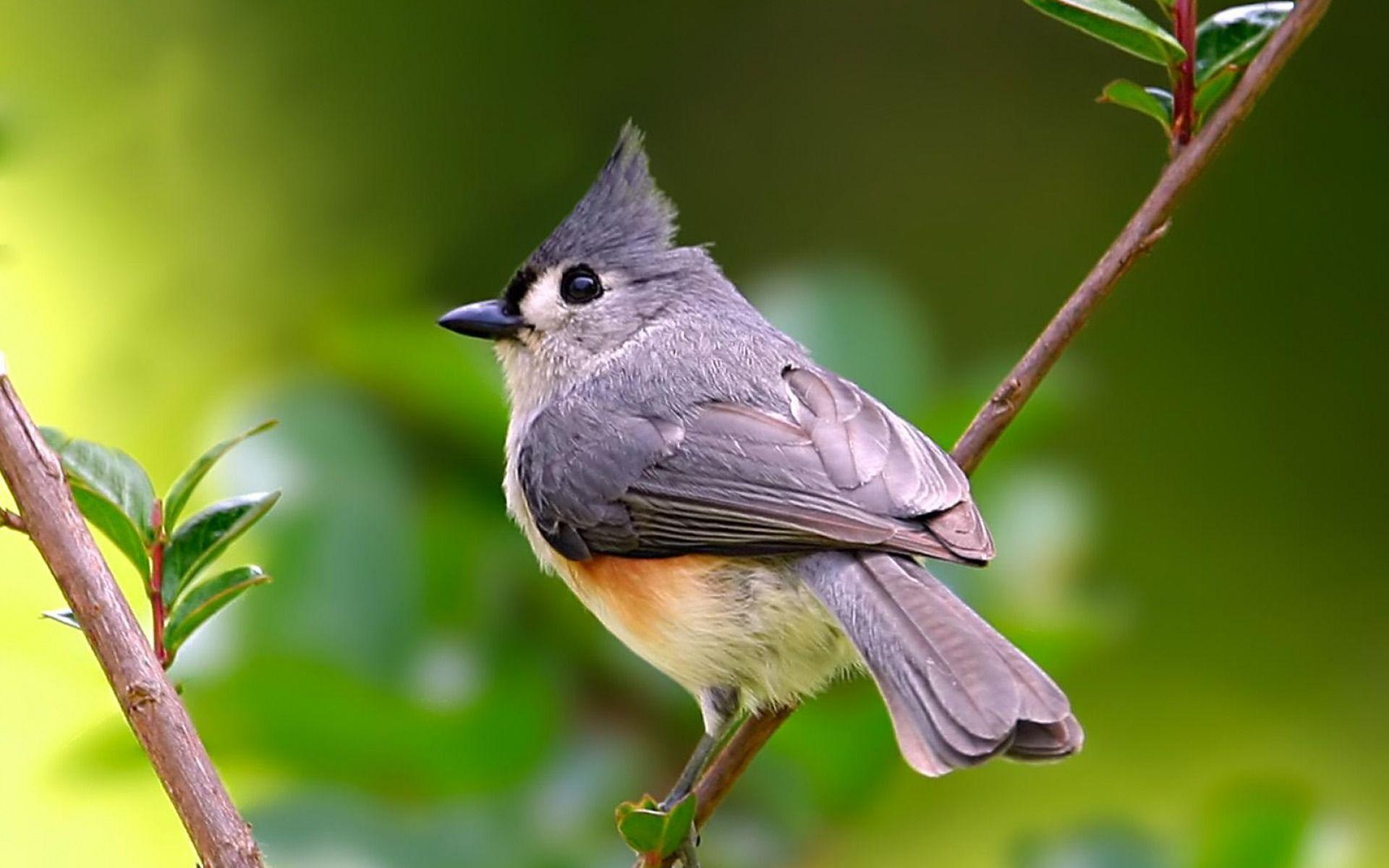очень картинки животных птичек картинка должна вписываться