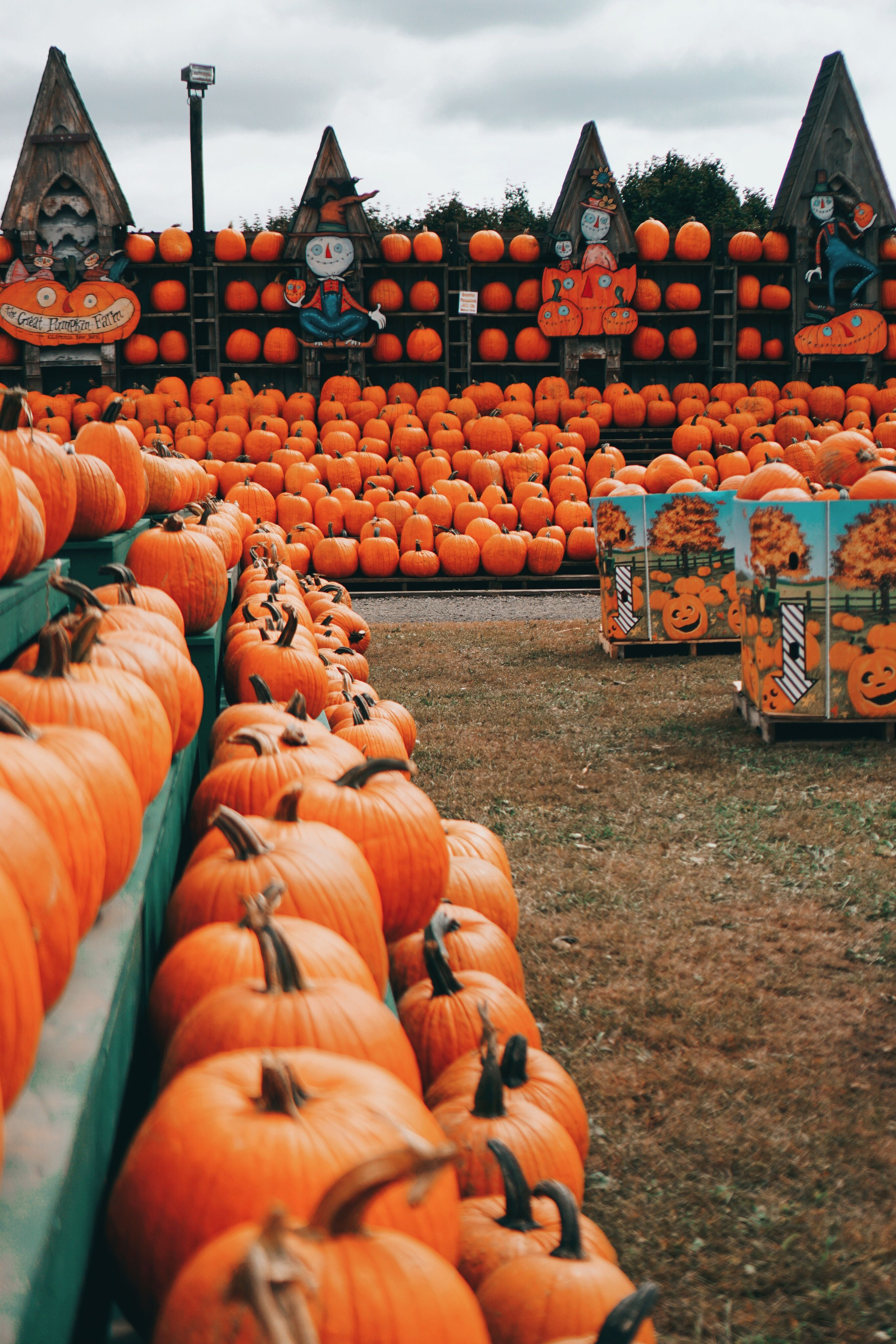 The Great Pumpkin Farm The February Fox Fall Wallpaper Pumpkin Farm Autumn Aesthetic
