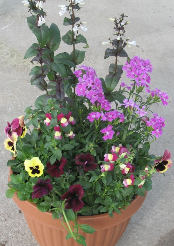 Power Flowers Spring Container Garden Container Flowers