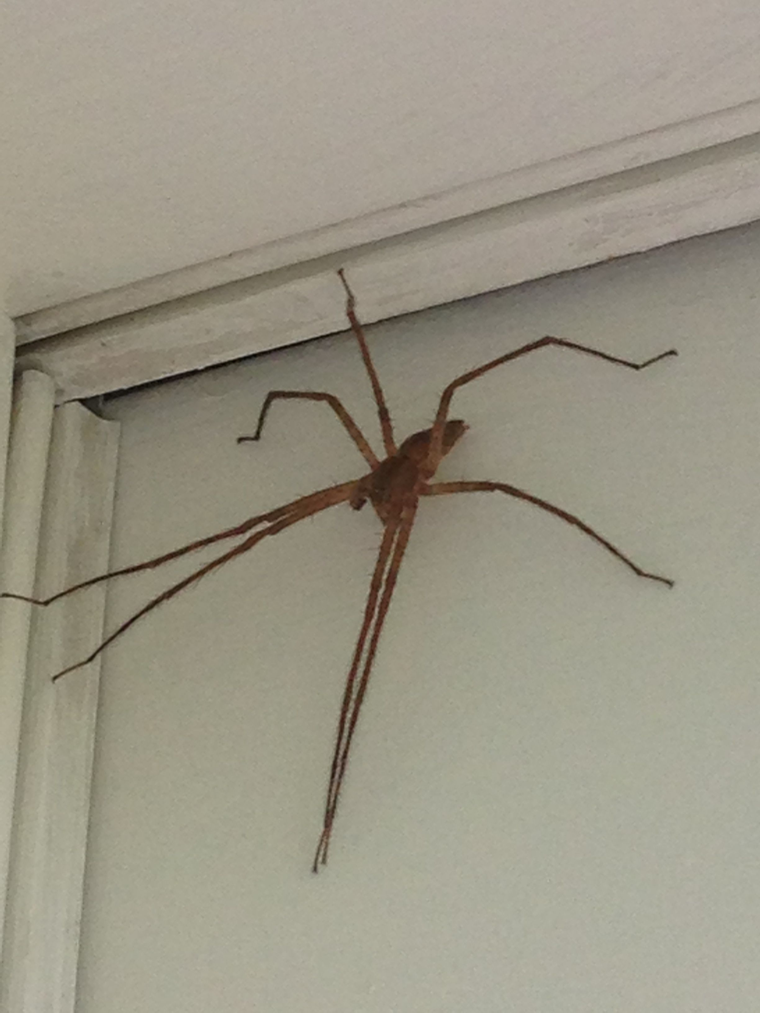 spider not sure what kind insects of missouri spider rh pinterest com au
