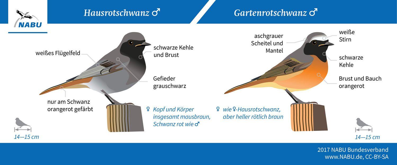 Vogel Bestimmen Leicht Zu Verwechseln Nabu Vogel Bestimmen Vogel Vogel Im Garten