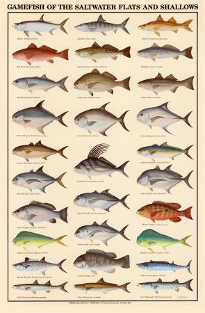 Gulf Coast Saltwater Fishing Fish Chart Saltwater Fishing Salt Water Fishing