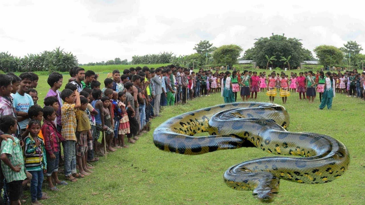 cool Biggest Snake in The World - Giant Anaconda - Largest ...